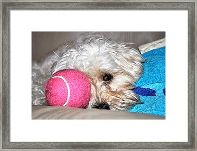 Princess Bashful Framed Print