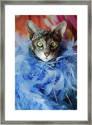 Princess Cat Framed Print