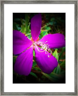 Princess Flower Framed Print