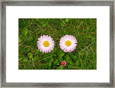 Princess Flower Face Framed Print by Tgchan