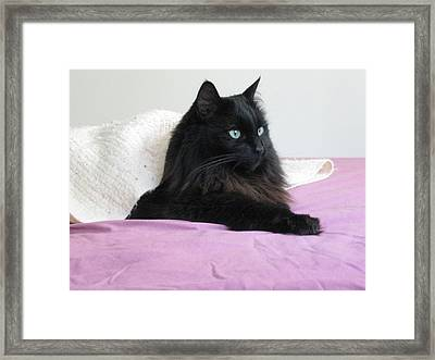 Framed Print featuring the photograph Princessy Cat by AJ Brown