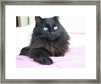 Princessy Cat Different Angle Framed Print