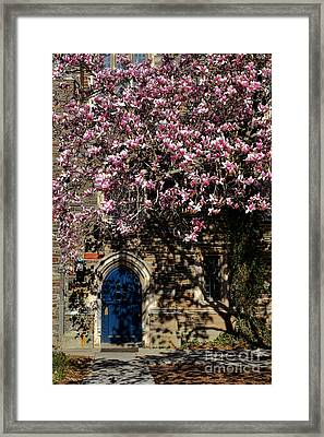 Princeton University Magnolia And Door Framed Print by Olivier Le Queinec