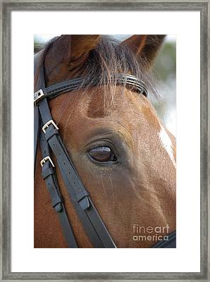 Framed Print featuring the photograph Prinz by Jim and Emily Bush