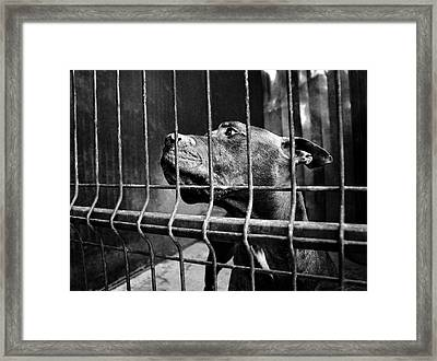 Prisoner Framed Print