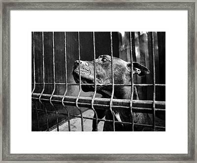 Prisoner Framed Print by Laura Melis