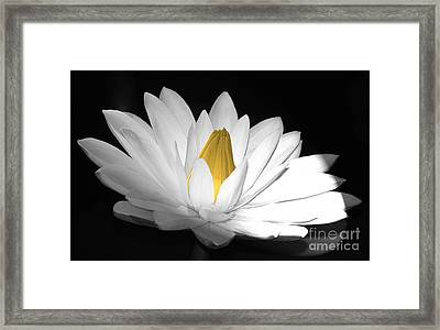 Pristine Framed Print by Cindy Manero