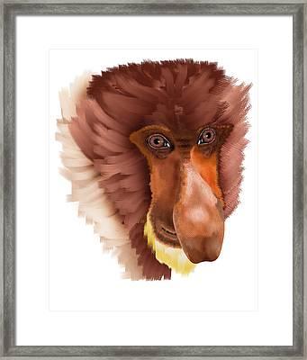 Proboscis Monkey Framed Print by Josef Dvorak