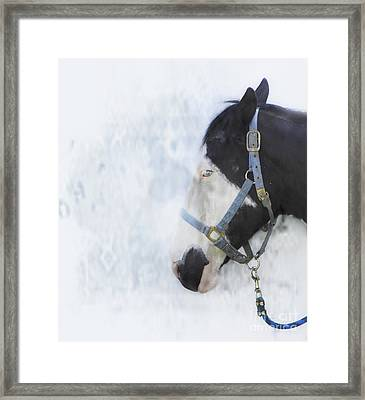 Profile In Horse  Framed Print by Steven Digman