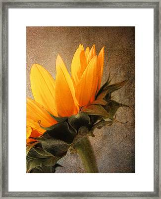 Framed Print featuring the photograph Profile by John Rivera