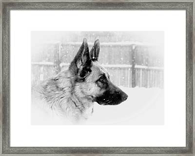 Profile Of A German Shepherd Framed Print