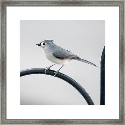 Profile Of A Tufted Titmouse Framed Print