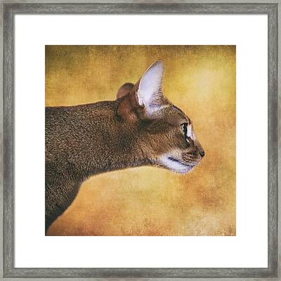 Profile Of Abyssinian Cat Framed Print by Wolf Shadow  Photography