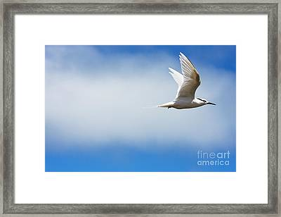 Profile Of Tern Framed Print by Dave Fleetham - Printscapes