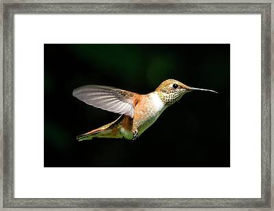 Profile Framed Print by Sheldon Bilsker