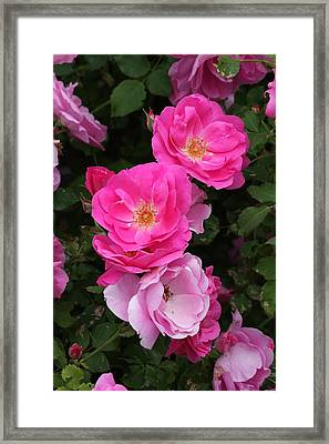 Framed Print featuring the photograph Profusion Of Pink by Doris Potter