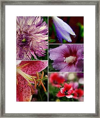 Profusion Framed Print by Priscilla Richardson