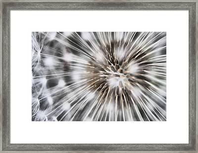 Proliferating Pest...  Framed Print by Russell Styles
