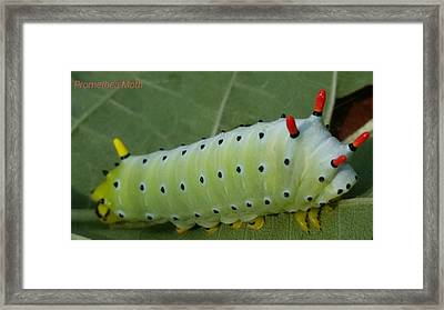 Promethea Moth Catterpillar  Framed Print
