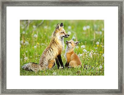 Promise Of Spring Framed Print by Aaron Whittemore