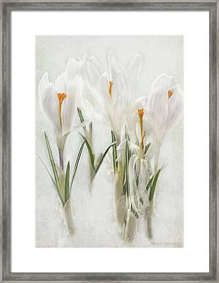 Promise Of Spring Crocus Framed Print