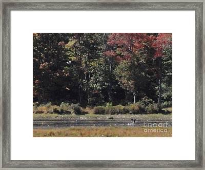 Promised Land Xii Framed Print by Daniel Henning