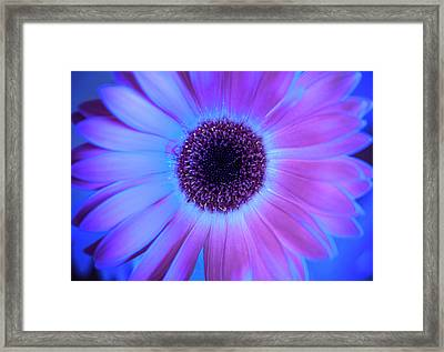 Framed Print featuring the photograph Promises Of Blue And Pink by Christi Kraft