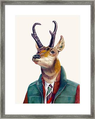 pronghorn Deer Framed Print by Animal Crew