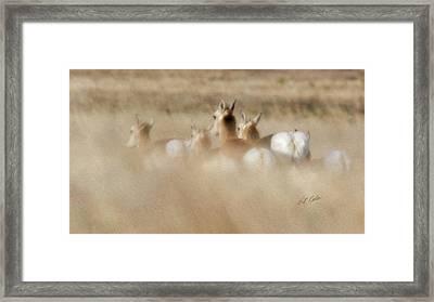 Pronghorn On The Run Framed Print