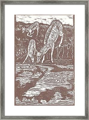Pronghorns At Waterhole Framed Print