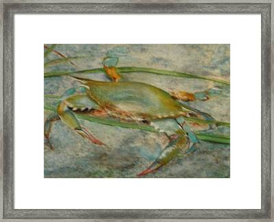 Propa Blue Crab Framed Print by Sibby S