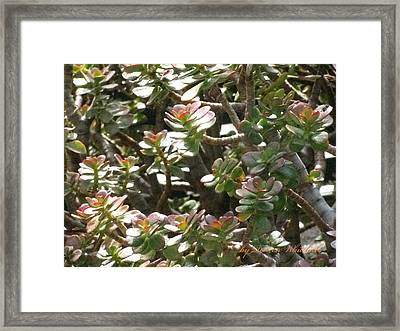 Prosperity And Success To You Framed Print by Doreen Whitelock
