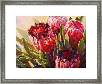 Protea - Tropical Flowers From Hawaii Framed Print