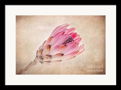 Proteas Framed Prints