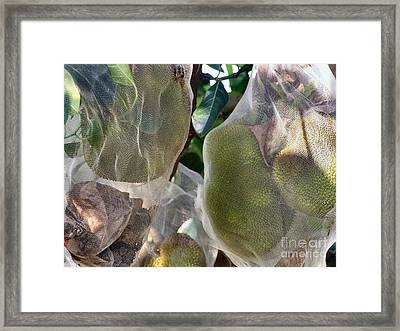 Protect Your Durian Framed Print by Kathy Daxon