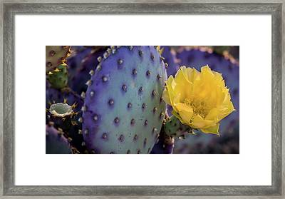 Protected Beauty Framed Print