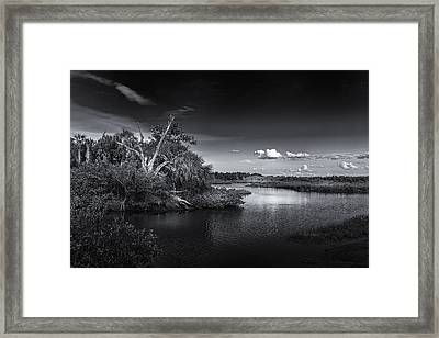 Protected Wetland Framed Print
