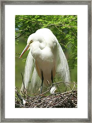 Protecting Framed Print