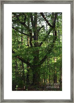 Framed Print featuring the photograph Protecting The Children by Skip Willits