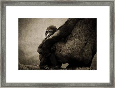 Protection Framed Print by Animus  Photography