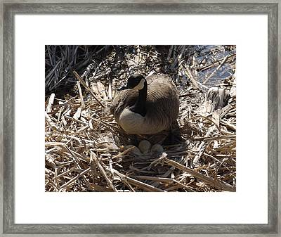 Protection Framed Print by Heather Hennick