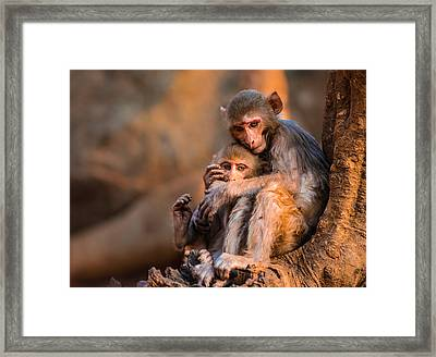 Framed Print featuring the photograph Protection by RC Pics