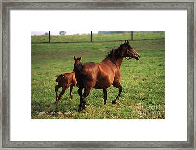 2f205 Protective Mare And Foal Framed Print
