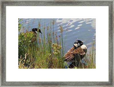 Protective Parents Framed Print by Cynthia Guinn