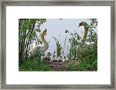 Protective Parents Framed Print by Joe Faherty