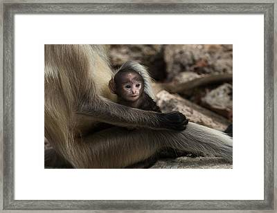 Protectiveness Framed Print