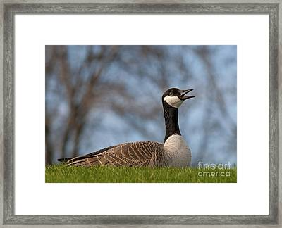 Proud Canadian.. Framed Print