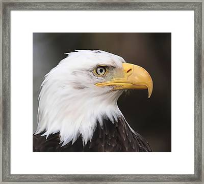 Proud Eagle Framed Print