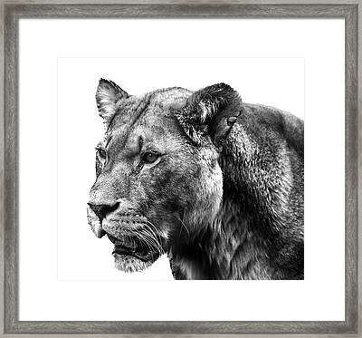 Proud Lioness Framed Print by Martin Newman