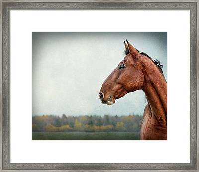 Proud Framed Print by Maggie Terlecki